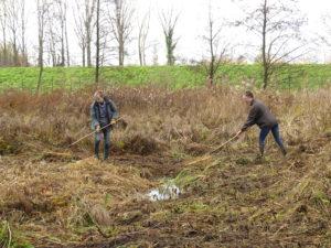 Gestion de milieux naturels par le Contrat Rivière Dendre et les étudiants de la HEPH-Condorcet