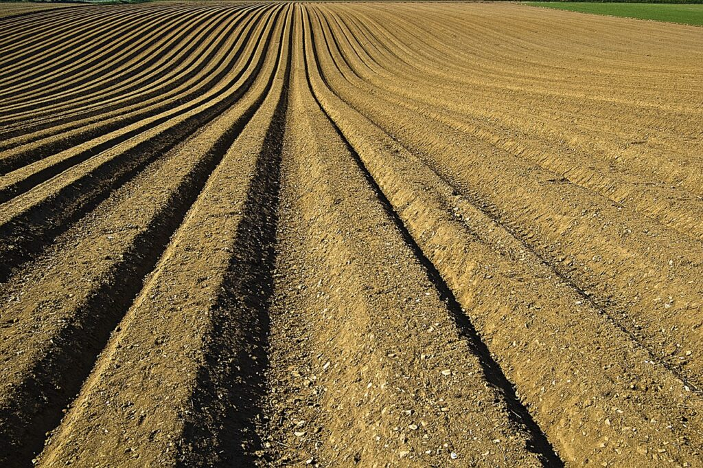 crop, furrows, soil-1149914.jpg